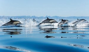 Preview wallpaper dolphins, flock, jump, sea, spray