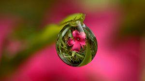 Preview wallpaper drop, flower, reflection, stem
