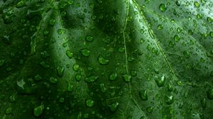 Preview wallpaper drops, dew, surface, grass, leaves