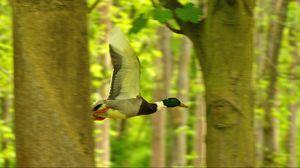 Preview wallpaper duck, bird, flying, tree