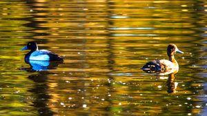 Preview wallpaper duck, bird, lake, waves, ripples