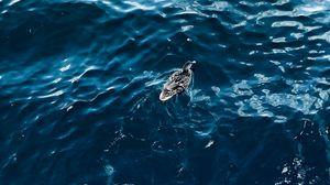 Preview wallpaper duck, bird, water, ripples, aerial view