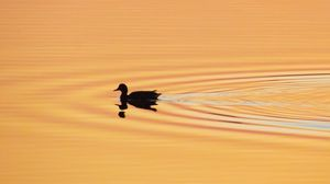 Preview wallpaper duck, silhouette, sunset