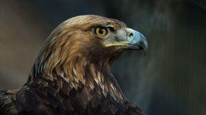 Preview wallpaper eagle, bird, beak, predator, look