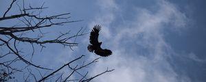 Preview wallpaper eagle, bird, sky, branches, flight