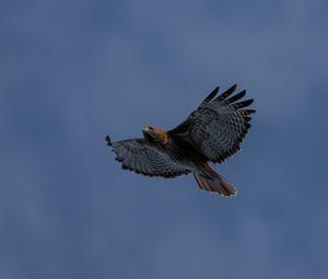 Preview wallpaper eagle, bird, wings, sky, flight
