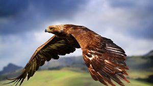Preview wallpaper eagle, birds, predators, flight, wings, flap