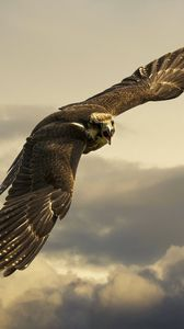 Preview wallpaper eagle, flight, sky, wings, clouds