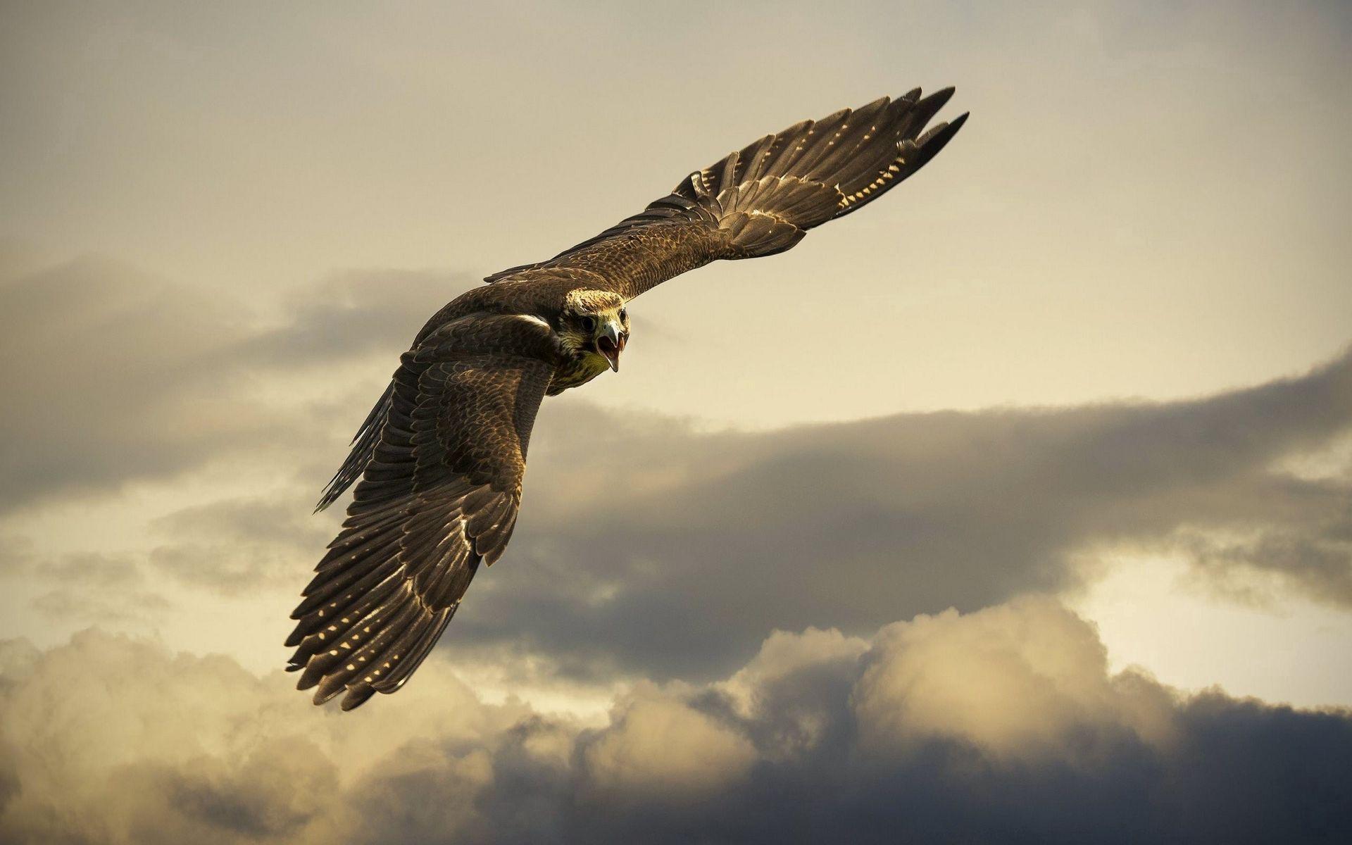 1920x1200 Wallpaper eagle, flight, sky, wings, clouds