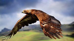Preview wallpaper eagle, flying, sky, bird, predator