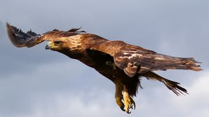 Preview wallpaper eagle, flying, sky, predator, bird