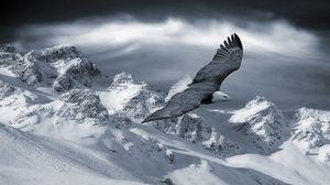 Preview wallpaper eagle, mountain, sky, snow, hills, birds, predators