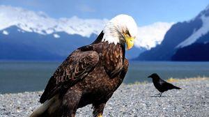Preview wallpaper eagle, raven, beach, bird, predator