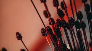 Preview wallpaper ears, dried flowers, backlight, red