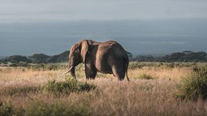 Preview wallpaper elephant, animal, mountain, savannah, wildlife