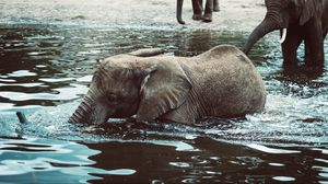 Preview wallpaper elephant, baby, water