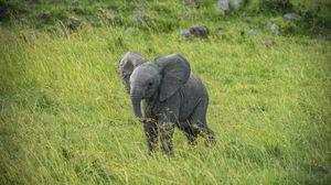 Preview wallpaper elephant, cub, animal, grass
