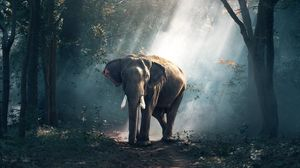 Preview wallpaper elephant, forest, trees, sunlight, shadow