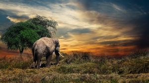 Preview wallpaper elephant, trees, grass