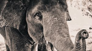 Preview wallpaper elephant, trunk, close-up