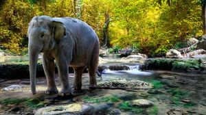 Preview wallpaper elephant, water, trees, rocks
