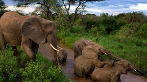 Preview wallpaper elephants, young, mother, caring, mud, bathing