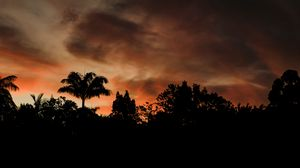 Preview wallpaper evening, trees, outlines, dark, sunset, clouds
