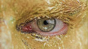 Preview wallpaper eye, pupil, paint, macro, man