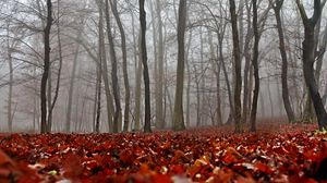 Preview wallpaper fall, foliage, forest, mist