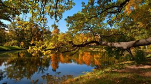 Preview wallpaper fall, pond, trees, landscape