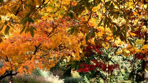 Preview wallpaper fall, trees, leaves, nature