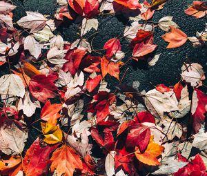 Preview wallpaper fallen leaves, leaves, asphalt, autumn, macro