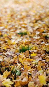 Preview wallpaper fallen leaves, leaves, autumn, yellow, macro