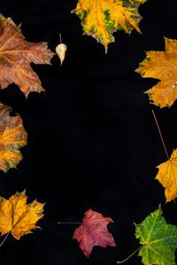 Preview wallpaper fallen leaves, leaves, autumn, macro, colorful