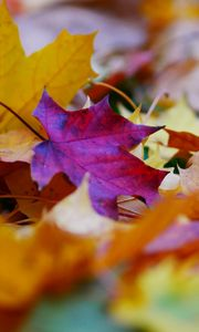 Preview wallpaper fallen leaves, leaves, autumn, bright, macro