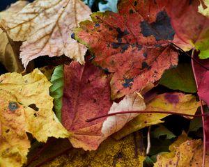 Preview wallpaper fallen leaves, leaves, macro, autumn