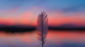 Preview wallpaper feather, blur, sunset, horizon