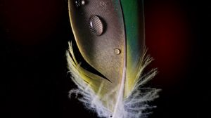 Preview wallpaper feather, drops, macro