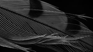 Preview wallpaper feather, macro, black and white