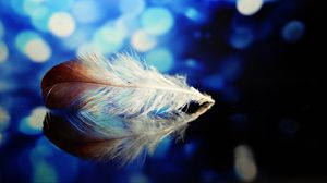 Preview wallpaper feather, reflections, close-up