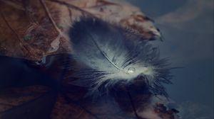 Preview wallpaper feather, water, autumn, lightness