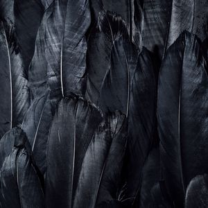 Preview wallpaper feathers, black, dark