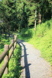 Preview wallpaper fence, path, trees, landscape, nature, green