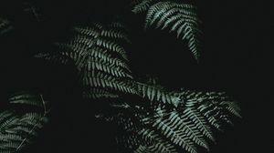 Preview wallpaper fern, dark, darkness, plant, leaves