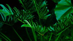 Preview wallpaper plant, leaves, green, exotic
