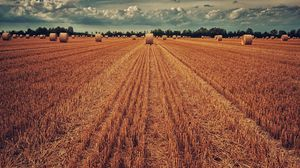 Preview wallpaper field, crop, wheat, hay, grass