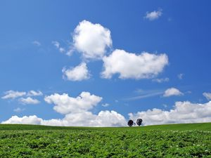Preview wallpaper field, economy, potatoes, culture, trees, sky, summer