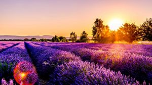 Preview wallpaper field, flowers, sunset, drome, france