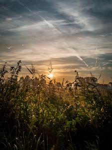 Preview wallpaper field, plants, sun, sunset, landscape, nature
