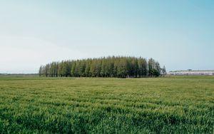 Preview wallpaper field, trees, grass, landscape, green